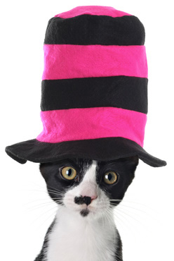 Cat in Hat-copyrighted image