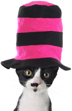 Cat in Striped Hat-copyrighted image/Fotolia.com